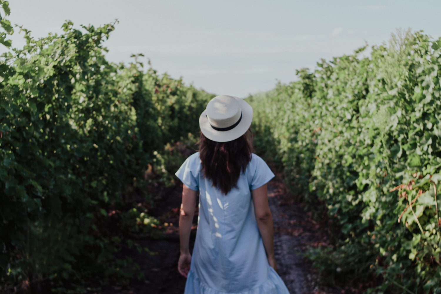Girl walking alone in a vineyard