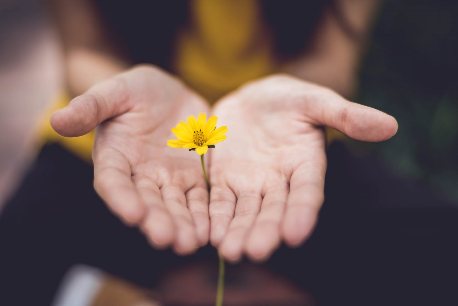 Hands together holding a daisy