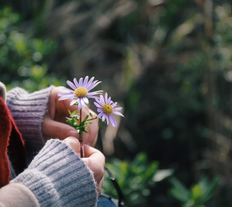 Ladies hands holding purple wildflowers