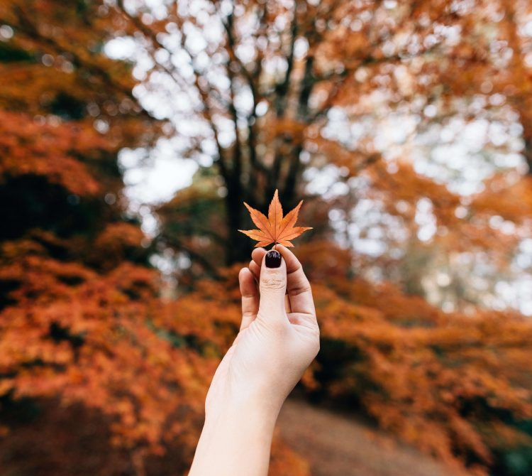 hand holding an autumn leaf
