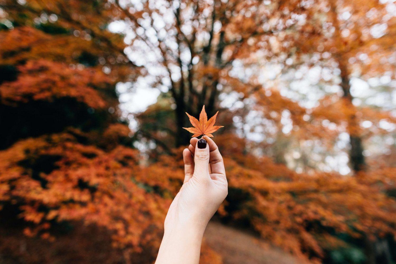 hand holding an autumn leaf